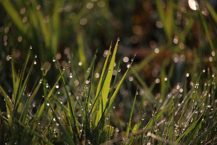 朝はまだ涼しいけど キラキラ Beauty In Nature EyeEm Nature Lover EyeEm Gallery よく行く場所 Nature Photography From My Point Of View Nature Noedit Nofilter EyeEm Best Shots おはよう~気合い入れるか😤