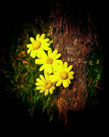 Yellow Flowers Yellow Yellow Yellow Yellow Flower Ausschnitt Point Of View Perspective Perspective Photography Perspektive Edited Yellow Weinreben Wein Und Blume Flowers Blume Gelb Gelbe Blumen🌾 Tunnelblick Eng Sichtbereich Eingeschränkt Weinwanderung Meine Ansicht Die Kleinen Dinge Im Leben The Small Things Wanderlust Paint The Town Yellow