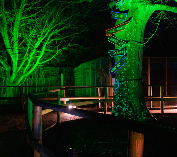 Green Color Tree Glowing Outdoors Illuminated Arrows Spectacle Of Light Sudeley Castle Alice In Wonderland