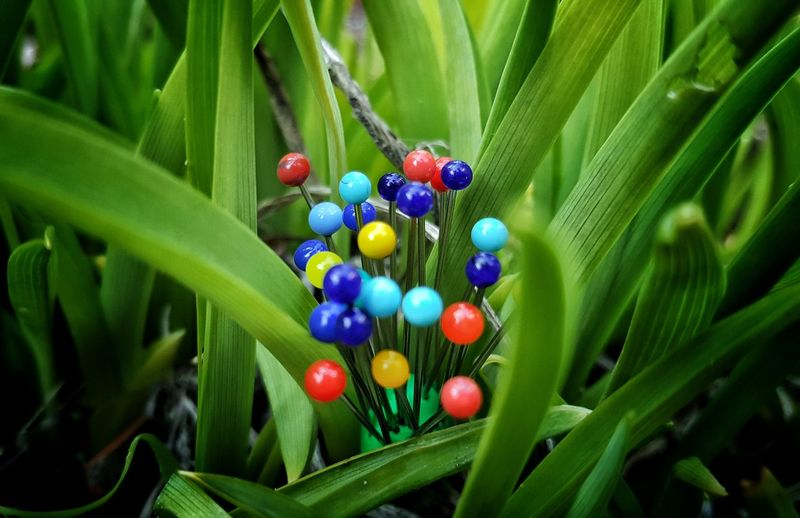 Colorful Straight Pins Amidst Green Plants