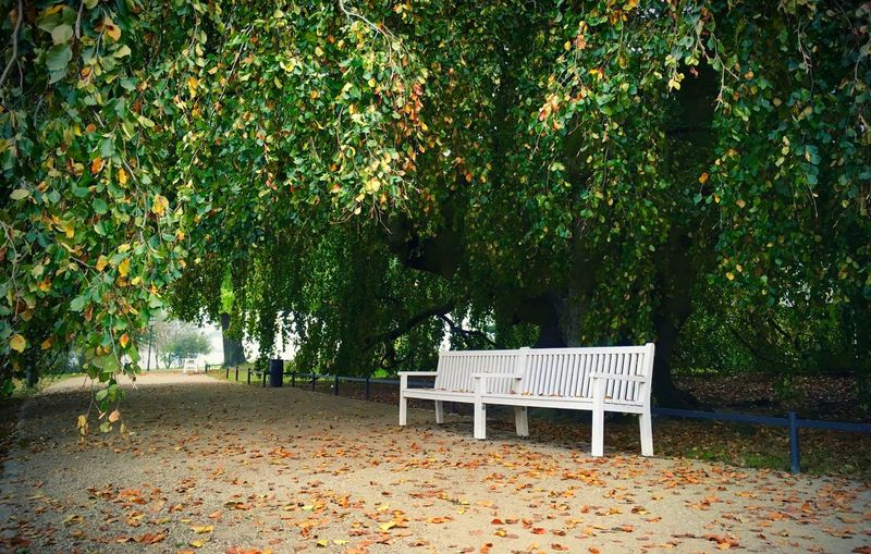 Autumn Beauty In Nature Bench Branch Day Empty Green Green Color Green Color Nature No People Outdoors Park Park - Man Made Space Park Bench Park Bench Parks Plant Scenics Schwerin Solitude Tranquil Scene Tranquility Tree Tree Trunk