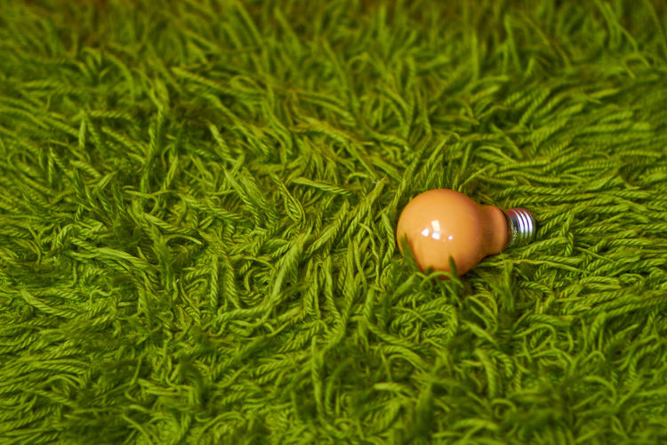 High angle view of electric bulb on green carpet