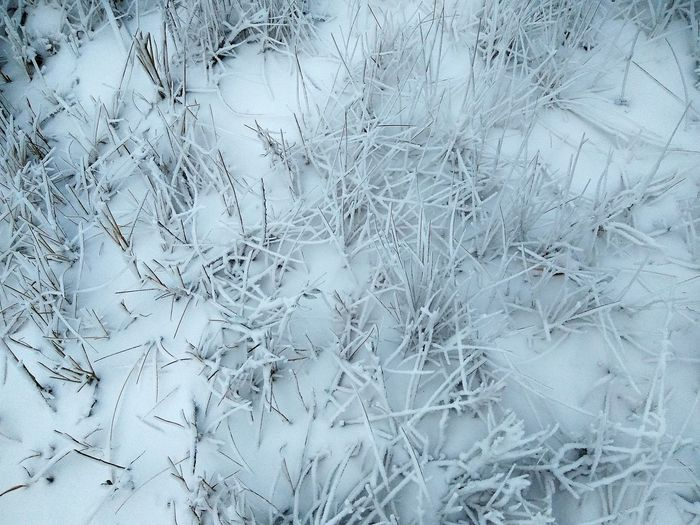 Textured  Abstract Backgrounds Rough Pattern Surface Level Close-up Gray No People Full Frame Frosty Nature Frosty Morning Frosted Glass Frost Beauty In Nature Snowscape Winter Landscape Cold Temperature Nature Snow Snow ❄ Frosty Grass Frosty Winter Wintertime Shades Of Winter