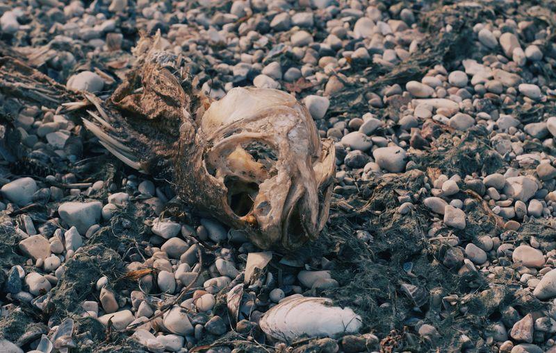 Dead Fiah Bone
