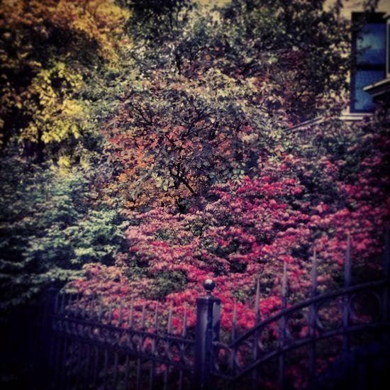 FallPalette Logansquare Autumnleaves Beautiful