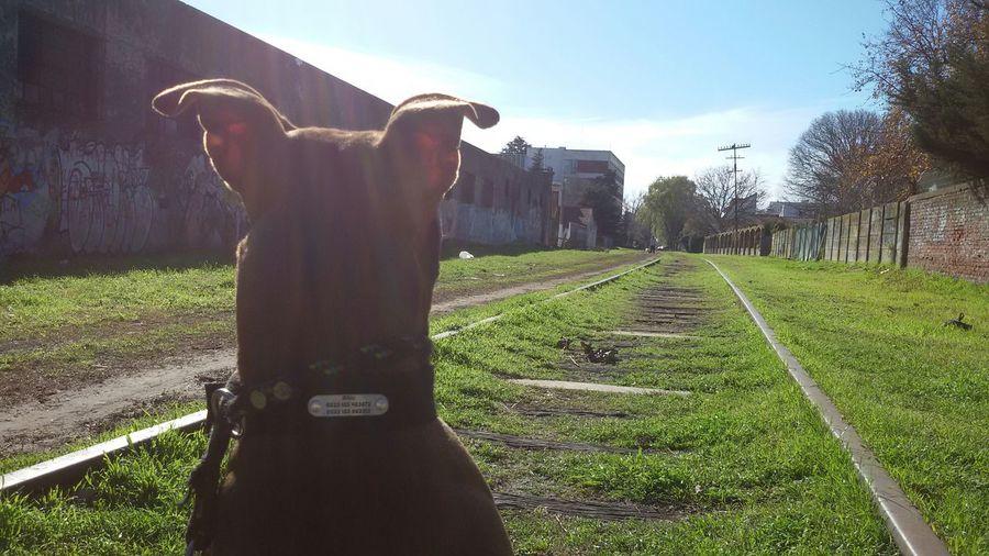 Pitbull Pets And Animals Bestfriend My Love