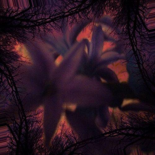 Flowers Flores In Between The Flowers~entre Las Flores