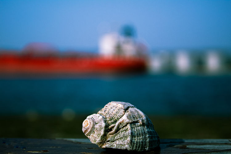 Close-up of snail on pier over sea against sky