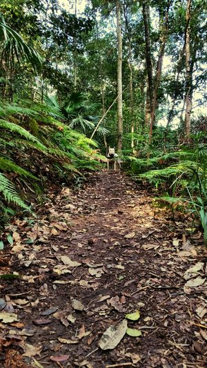 Bully In The Bush Dogs Of EyeEm Dogslife Dogs Dog Walking Bullterrierphotography Bullterrier