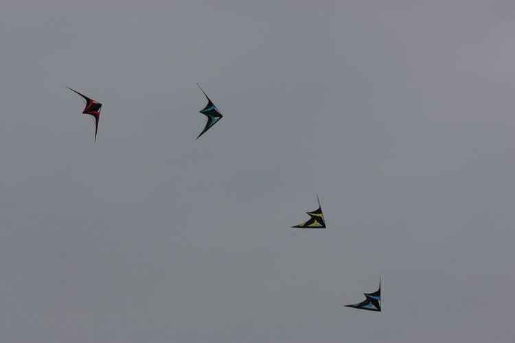 Kite Kite Festival Kite Flying Cerf Volant