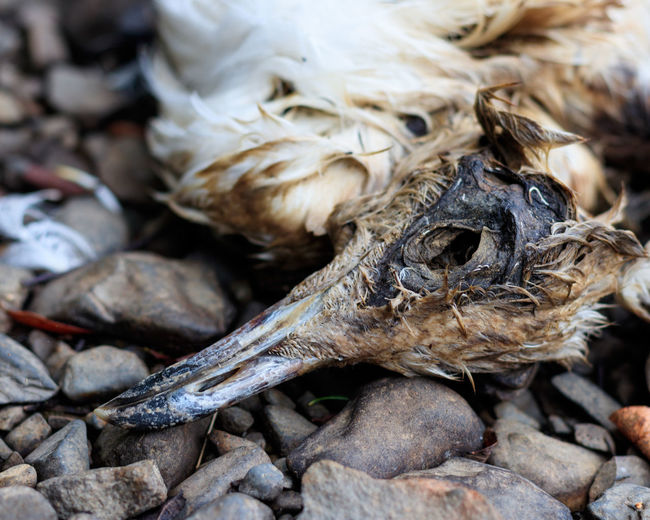 Beak Death Decay Feathers Animal Body Part Animal Themes Bird Birds Bone  Dead Death & Decay Decaying Feather  Gull Nature Skull Vertebrate