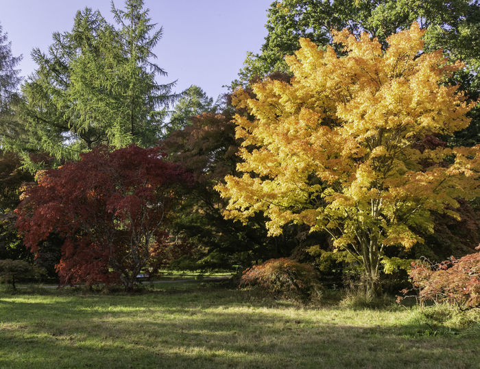 Tree Beauty In Nature Autumn Scenics - Nature Outdoors No People Nature Plant Colorful HDR