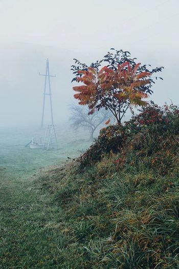 Fog Grass