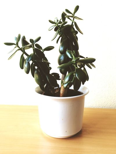 Plants Bored