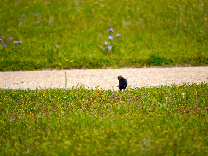 Beauty In Nature Bird Black Color Day Field Fort Pickens National Park Grass Grassy Green Green Color Growth Landscape Lawn Mammal Nature Outdoors Pets Plant Selective Focus Tranquility Great Outdoors - 2016 EyeEm Awards Found On The Roll Nature's Diversities