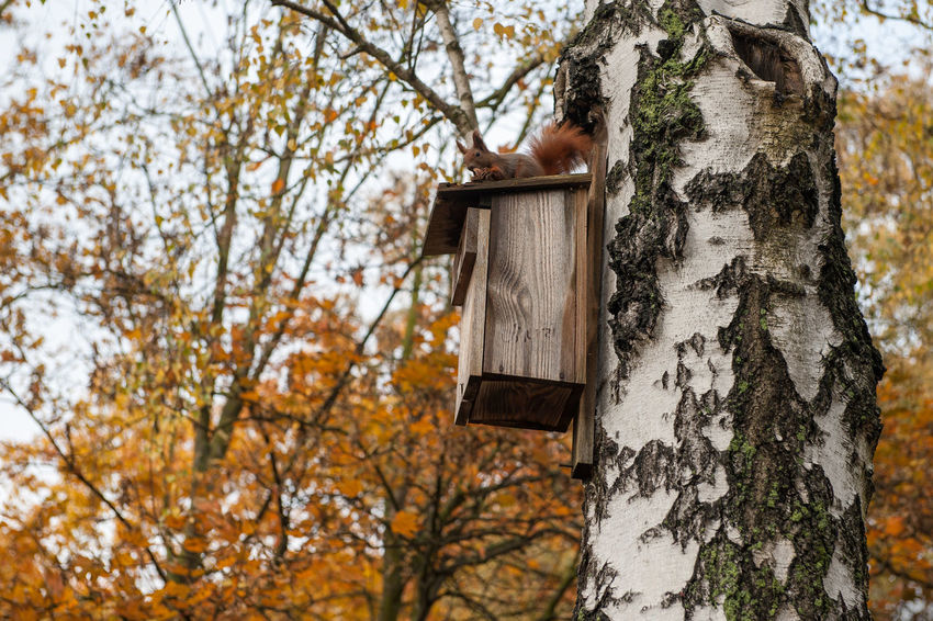 Squirrel on the birdhouse Atumn Beauty In Nature Birdhouse Branch Close-up Day Growth Leaf Low Angle View Nature No People Outdoors Sky Squirrel Tree Tree Trunk