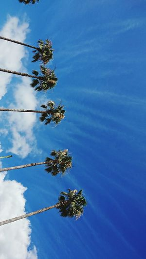 【Hyogo,Japan】awaji island 日本の夏 Summer Of Japan Awaji Island Japan Hyogo EyeEm Selects Tree Blue Palm Tree Sky Close-up