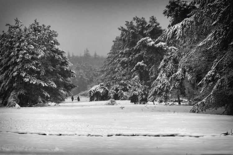 Winter Wonder Land Winter Forestwalk Photographer Full Frame Landscape_Collection Nikon Eyem Best Shots Nature_collection EyeEm Best Shots Eye4photography  EyeEm Nature Lover Snow Blackandwhite December Winter Forest Photography Forest Tree Nature Beauty In Nature Winter Scenics Cold Temperature Water Tranquility Snow Landscape Outdoors Tranquil Scene Sky Day