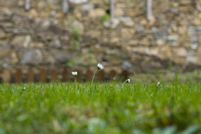 Grass Plant Nature Selective Focus Field Green Color No People Land Day Beauty In Nature Growth Outdoors Flying Vertebrate Springtime Small Flower