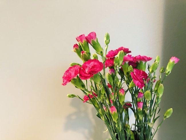 Plant Flower Flowering Plant Fragility Vulnerability  Freshness Beauty In Nature