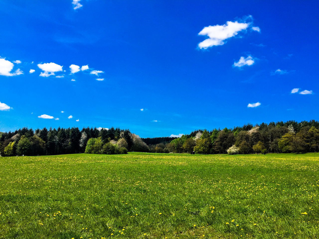 grass, tree, nature, beauty in nature, blue, field, sky, scenics, tranquil scene, tranquility, landscape, green color, growth, no people, cloud - sky, day, blue sky, outdoors, freshness