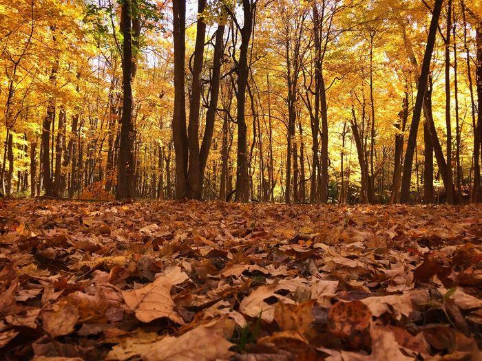 Fall foliage Fall Beauty Fall Leaves Fall Colors First Eyeem Photo Iphonephotography Showcase: November