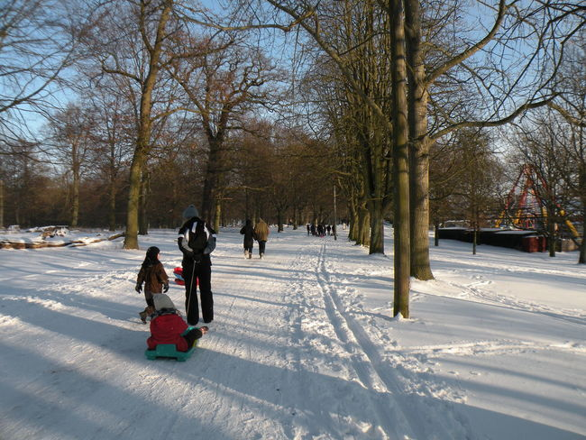 Snow Winter Cold Temperature Tree Bare Tree Lifestyles Rear View Two People Tobogganing Sled Outdoors Real People Nature Leisure Activity Day Childhood Warm Clothing Beauty In Nature People Adult Jægersborg Dyrehave Dyrehaven - in Jægersborg Deer Park in Klampenborg, Denmark