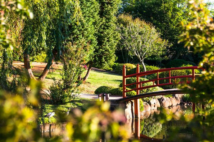 Australia Holiday Japanese Garden Pond Reflection Toowoomba Growth Nature Plant Queensland Tree University Usq Water