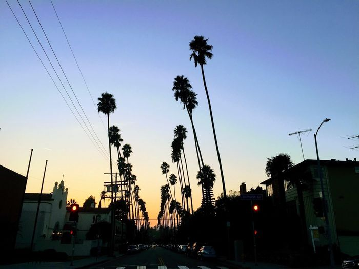 Built Structure Building Exterior Architecture Land Vehicle Car Street Light Sunset Transportation Palm Tree Street Sky Mode Of Transport Road Silhouette Low Angle View City Outdoors Cable Tree No People Golden Hour Sunset_collection Sunset Silhouettes Sunsets Losangeles