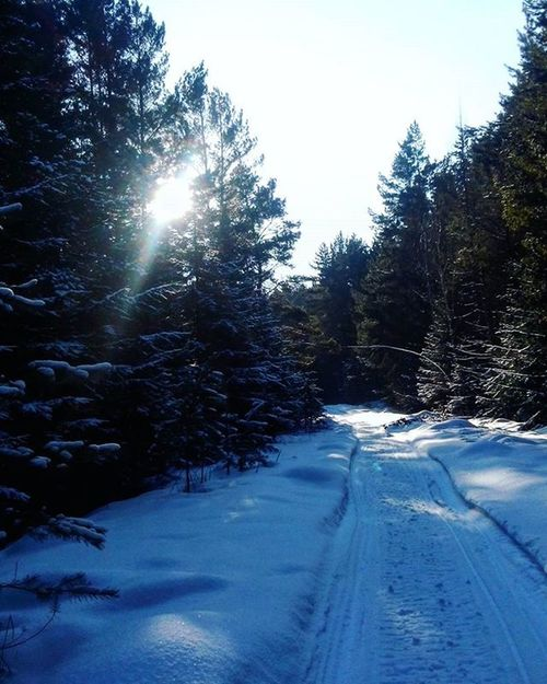 зима красота Русскаязима Лес Russia налыжах лыжник солнце ищемзайцев