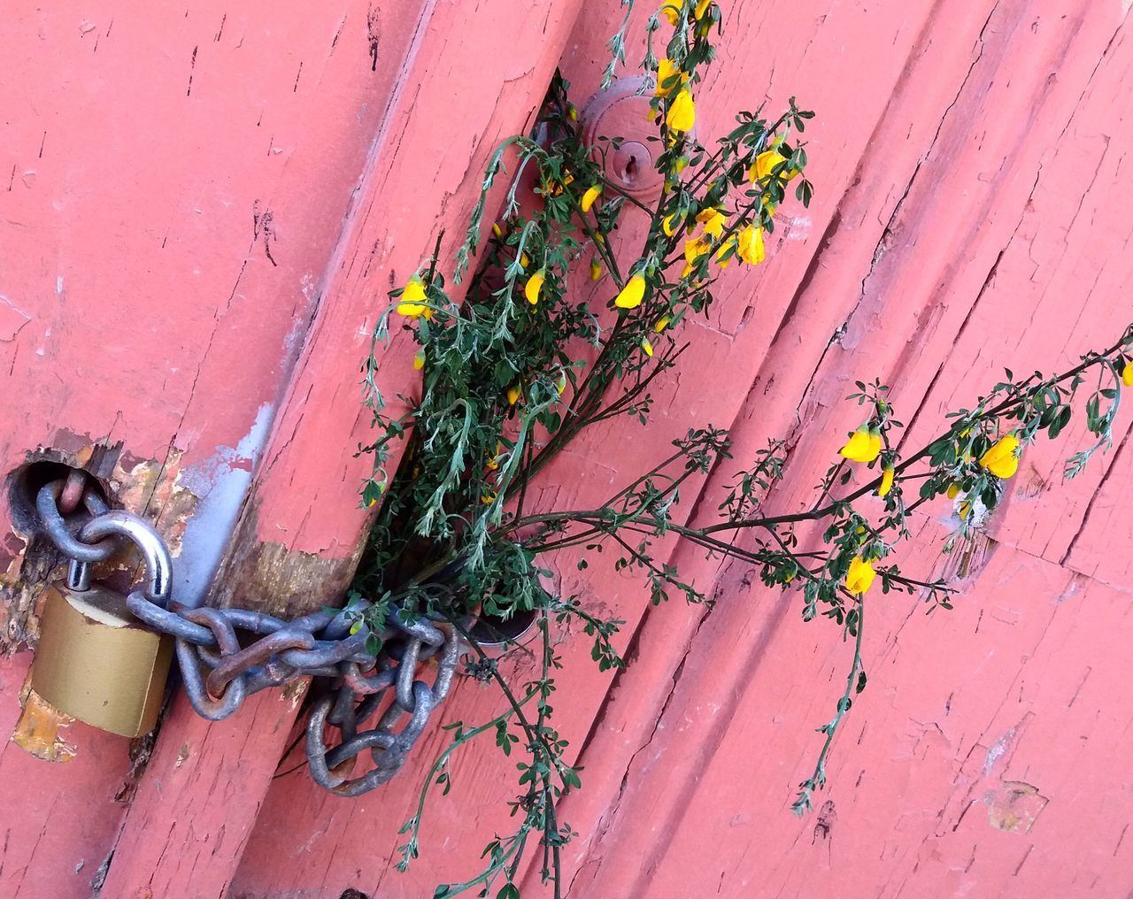 Close-Up Of Locked Wooden Door With Dried Flowers
