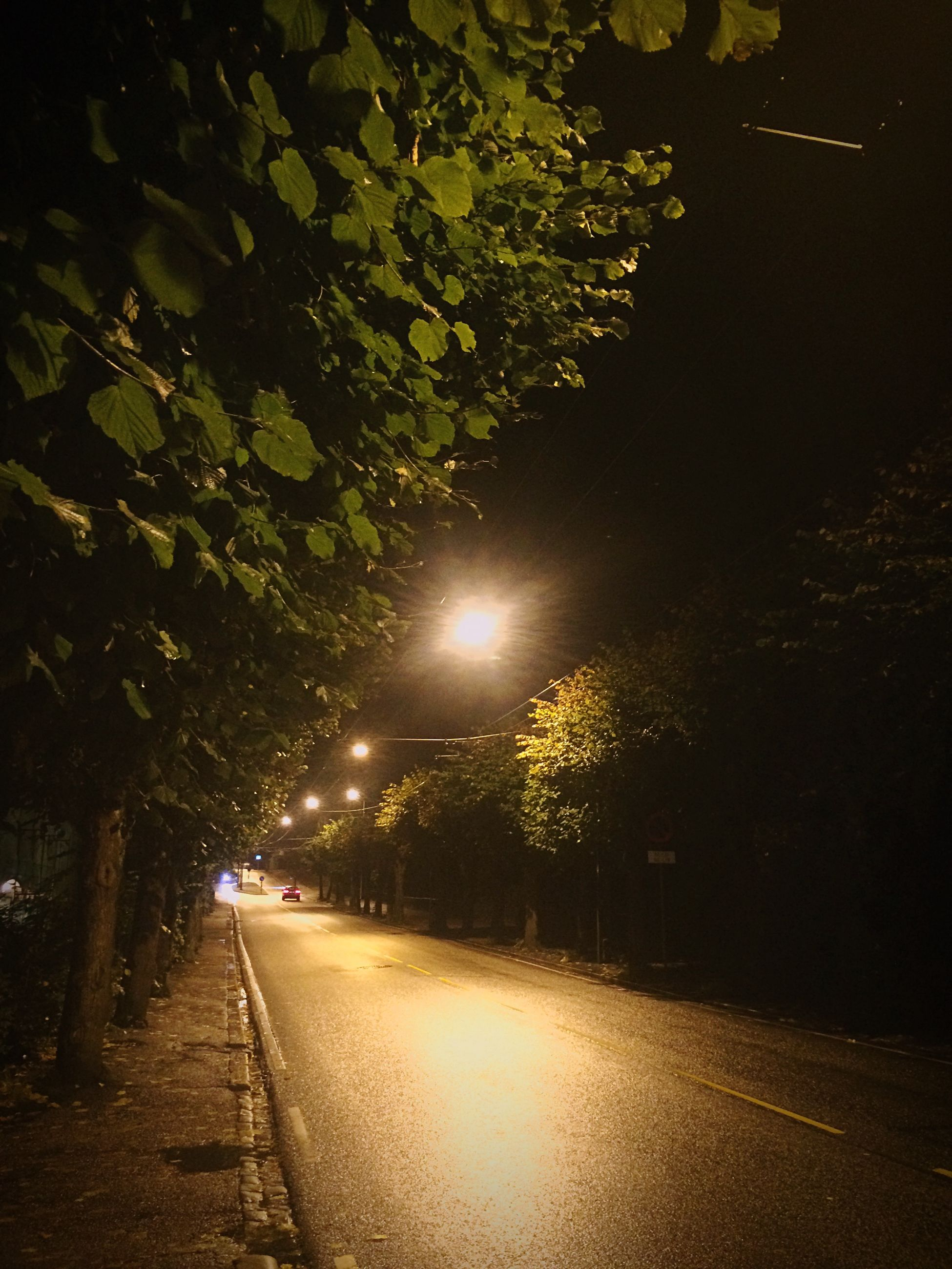 night, illuminated, street light, the way forward, tree, lighting equipment, street, growth, road, plant, footpath, light - natural phenomenon, empty, nature, outdoors, no people, dark, tranquility, green color, empty road