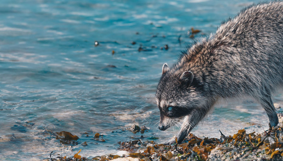 View Of Animal Walking On Beach