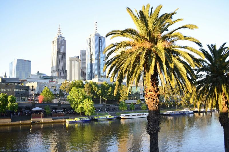 Palm trees in front of Melbourne's CBD and the Yarra river during the golden hour. Skyscraper City Tree Palm Tree Water Cityscape Architecture Modern Travel Destinations Urban Skyline Nature Australia Yarra River Melbournecbd Melbourne City First Eyeem Photo EyeEmNewHere
