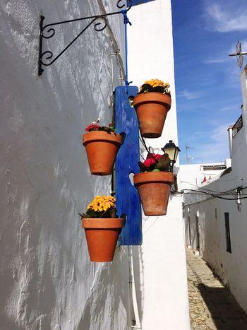 Flowerpots Whitevillage SPAIN Flowers White Blue Terracotta