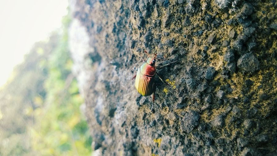 Don' just be a normal bug. Be the bug that live on the cliff of a volcano. Bug Insects Butterfly Pretty [a:1540] EyeEm Best Shots Beauty Bug Micro Traveling Exploring New Ground
