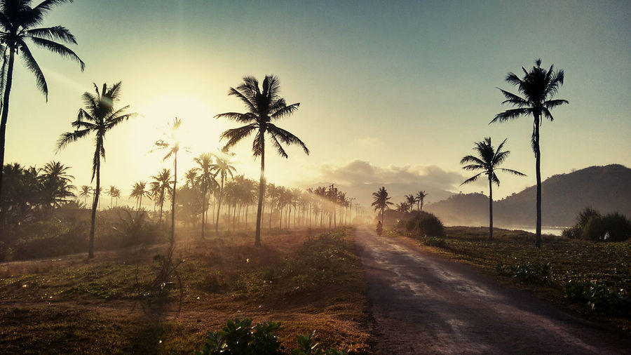Road amidst palm trees against sky during sunset