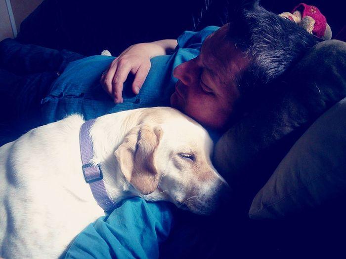 Partage d'un calin canin Chien Calin Dog Love Cute Pets
