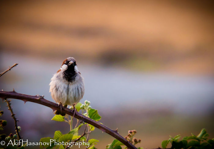 Bird Close-up Focus On Foreground Nature No People One Animal Outdoors Perching Sparrow