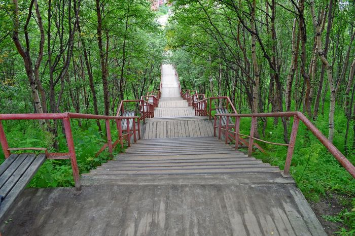 Beauty In Nature Day Forest Growth Nature No People Outdoors Railing The Way Forward Tranquil Scene Tranquility Tree Tree Trunk The Graphic City