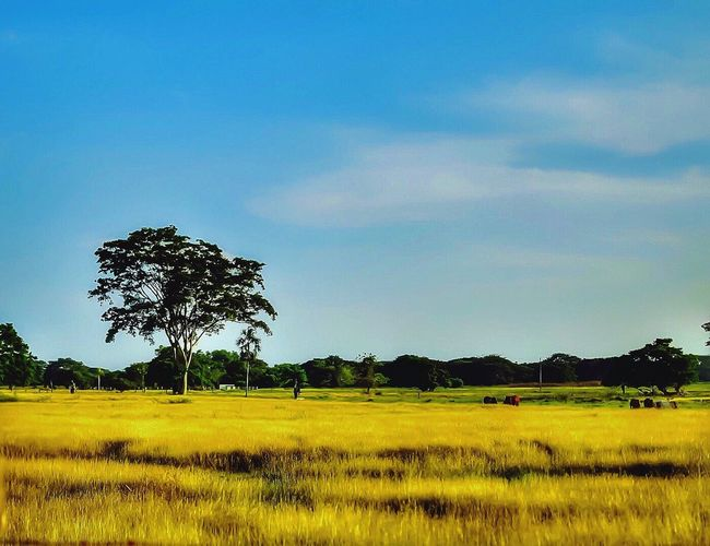 Landscape Landscape_photography Scenics Nature Sunnyday☀️ Sunny