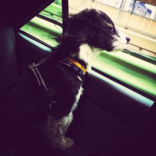 Моя любовь Кузя собака любимая калининград кенигсберг dog kenigsberg Kaliningrad love