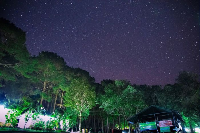 Star - Space Night Astronomy Sky Constellation Space Galaxy Star Field Nature Beauty In Nature Tree Dark Scenics Illuminated Tranquil Scene Outdoors No People Milky Way Star Trail
