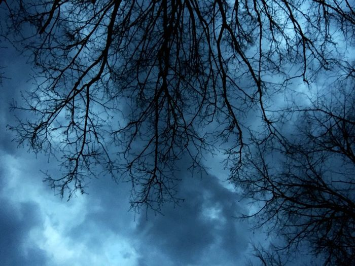 Tree Sky Cloud - Sky Bare Tree Branch Low Angle View No People Blue Beauty In Nature Day Tree Canopy  Directly Below Plant Scenics - Nature Nature