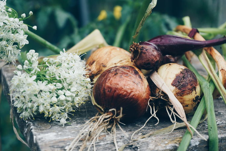 Close-up of raw onions with flowers on old table