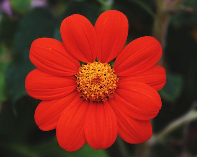 Flowerporn Flowers Urban Gardening Nature Pretty