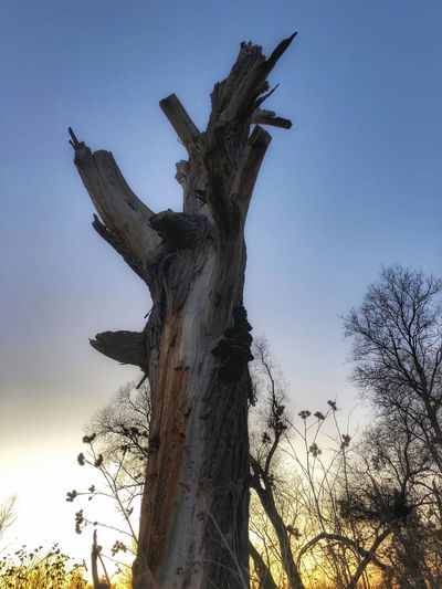 Low angle view of dead tree against sky