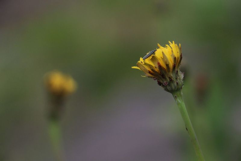 Close-Up Of Insect On Yellow Flower In Garden