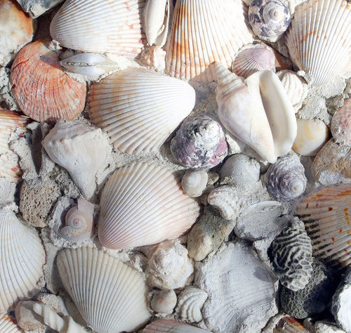 Animal Shell Animal Themes Backgrounds Close-up Day Freshness Full Frame Large Group Of Objects Nature No People Outdoors Sea Life Seafood Seashell Washed Ashore