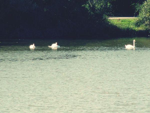 Promenade pour decouvrir cet belle ville Belfort Lac